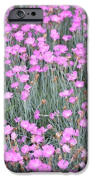Pink Incarnated iPhone Case by Sonali Gangane