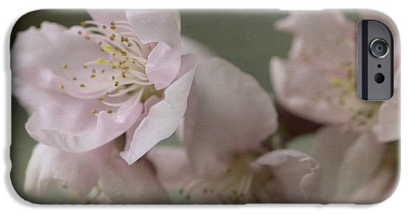 Lindalees iPhone Cases - Pink is the color of happiness iPhone Case by Linda Lees