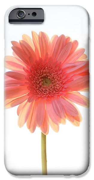 Little Girl iPhone Cases - Pink Lemonade iPhone Case by Amy Tyler
