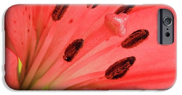Close Up Floral iPhone Cases - Pink Lily Macro iPhone Case by Adam Romanowicz