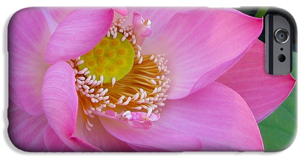 Pink Tapestries - Textiles iPhone Cases - Pink lotus iPhone Case by Dan A  Barker