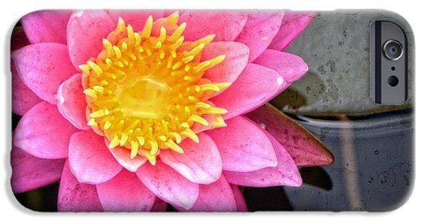 Affirmation iPhone Cases - Pink Lotus Flower - Zen Art by Sharon Cummings iPhone Case by Sharon Cummings