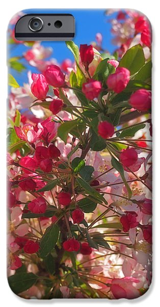 Pink Magnolia iPhone Case by Joann Vitali