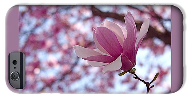 Magnolia iPhone Cases - Pink Magnolia iPhone Case by Rona Black