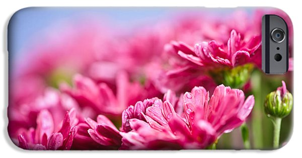 Fuchsia iPhone Cases - Pink mums iPhone Case by Elena Elisseeva