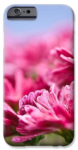 Pink mums iPhone Case by Elena Elisseeva