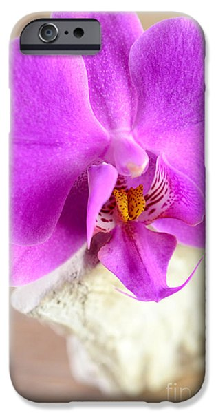 Diy iPhone Cases - Pink Orchid on White Colored Driftwood iPhone Case by Sabine Jacobs