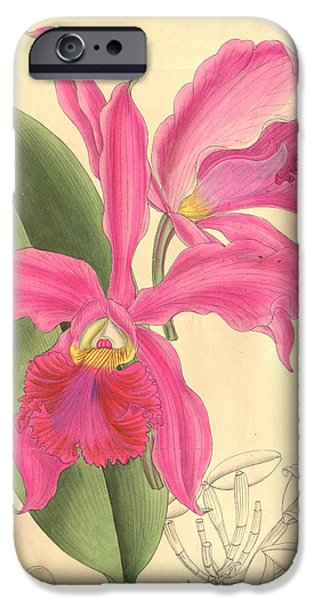 Dentist Drawings iPhone Cases - Pink Orchid iPhone Case by Philip Ralley