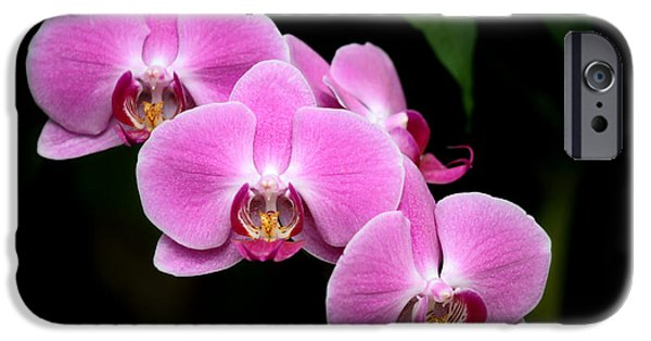 Floral Photographs iPhone Cases - Pink Orchids in a Row iPhone Case by Sabrina L Ryan