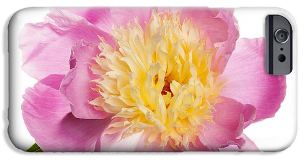 Flora Photographs iPhone Cases - Pink peony flower iPhone Case by Elena Elisseeva