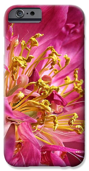 Pink Peony Flower Macro iPhone Case by Jennie Marie Schell