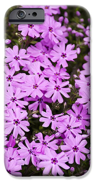 Nature Abstract iPhone Cases - Pink Phlox Flowers Abstract iPhone Case by Christina Rollo