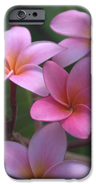 Big Island iPhone Cases - Pink Plumeria iPhone Case by Brian Harig