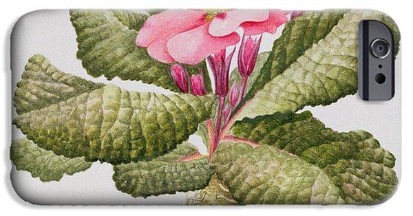 Primroses iPhone Cases - Pink primrose iPhone Case by Sally Crosthwaite