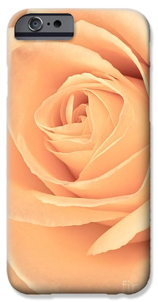 Rose iPhone Cases - Pink Rose iPhone Case by Edward Fielding