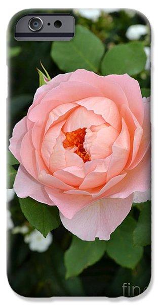 Hamburg Digital Art iPhone Cases - Pink Rose in Hamburg Planten und Blomen iPhone Case by Eva Kaufman