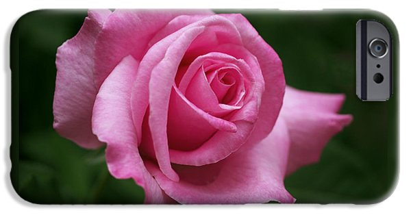 Roses Photographs iPhone Cases - Pink Rose Perfection iPhone Case by Rona Black
