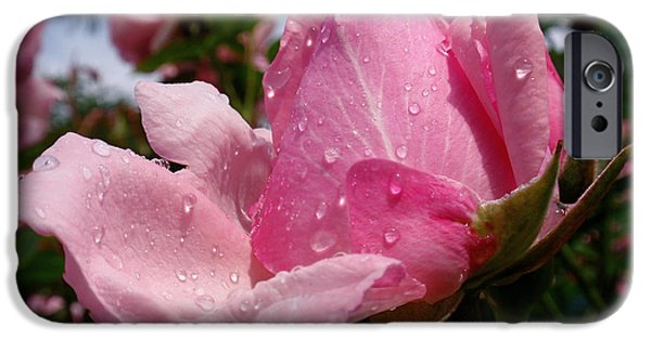 Rain Photographs iPhone Cases - Pink Rose iPhone Case by Rona Black