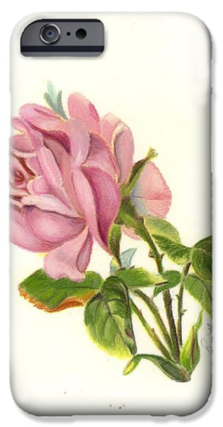 Flora Drawings iPhone Cases - Pink Rose iPhone Case by Ruth Seal