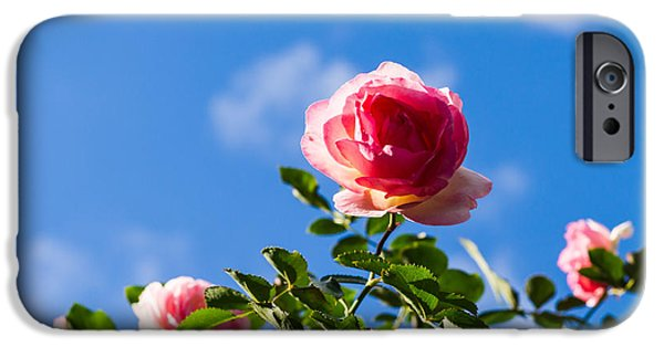 Pink Roses iPhone Cases - Pink Roses - Featured 3 iPhone Case by Alexander Senin