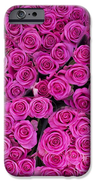 Pink Photographs iPhone Cases - Pink Roses iPhone Case by Tim Gainey
