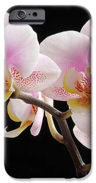 Pink Sensations iPhone Case by Juergen Roth