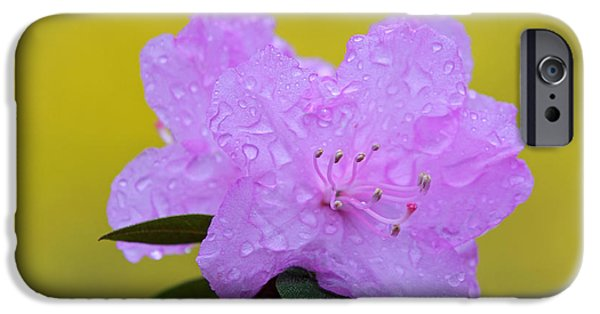 Best Sellers -  - Rainy Day iPhone Cases - Pink Spring Blossom iPhone Case by Juergen Roth