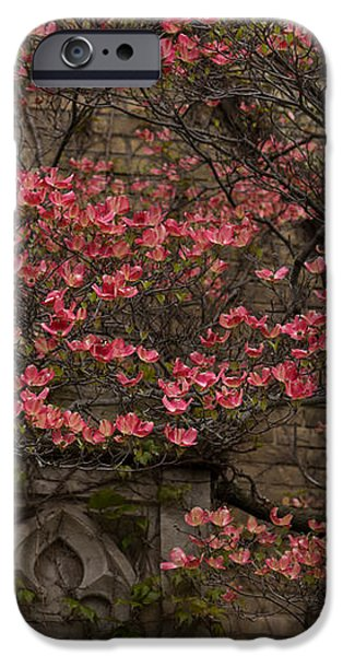 Pink Spring - Dogwood Filigree and Lace iPhone Case by Georgia Mizuleva