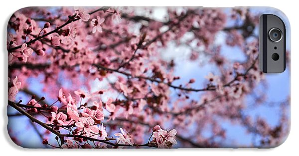Cherry Blossoms iPhone Cases - Pink Spring iPhone Case by Guido Montanes Castillo