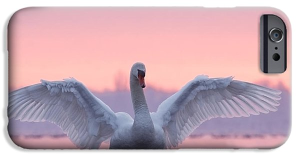 Swan iPhone Cases - Pink Swan iPhone Case by Roeselien Raimond