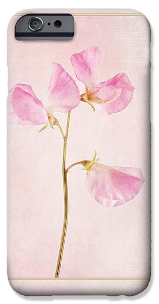Sweet Digital iPhone Cases - Pink Sweet Pea iPhone Case by John Edwards