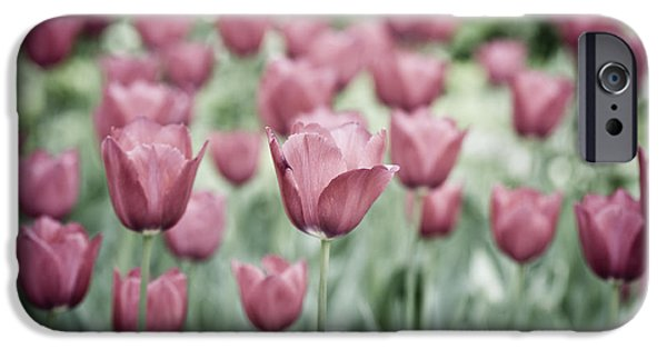 Garden Images iPhone Cases - Pink Tulip Field iPhone Case by Frank Tschakert