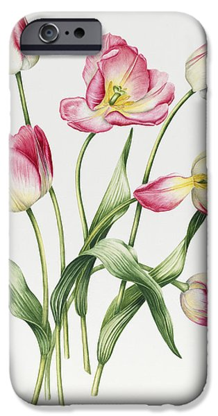 Botanical Paintings iPhone Cases - Pink Tulips iPhone Case by Sally Crosthwaite