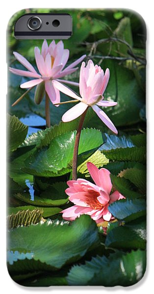 Nymphaea iPhone Cases - Pink Water Lillies iPhone Case by Mandy Shupp