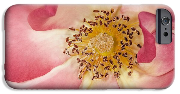 Botanical iPhone Cases - Pink With A Touch Of Yellow iPhone Case by Susan Candelario