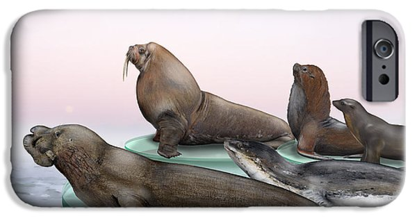 North Sea Drawings iPhone Cases - Pinnipeds  - Walruses Odobenidae - Eared and Earless seals Otariidae Phocidae - Interpretive Panels iPhone Case by Urft Valley Art