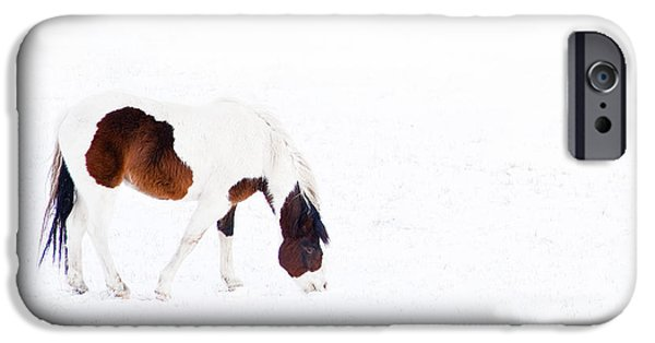 Farm Pyrography iPhone Cases - Pinto Pony iPhone Case by Theresa Tahara