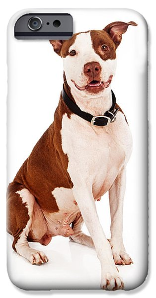 Pit Bull iPhone Cases - Pit Bull Dog With Happy Expression iPhone Case by Susan  Schmitz