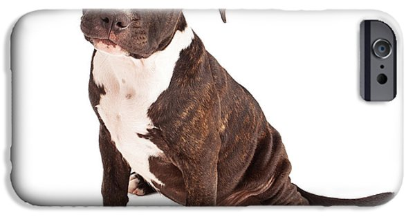 Pit Bull iPhone Cases - Pit Bull Puppy Black and White iPhone Case by Susan  Schmitz