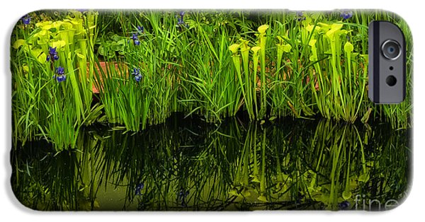 Reflection In Pitcher iPhone Cases - Pitcher Plant Paradise iPhone Case by Mike Nellums