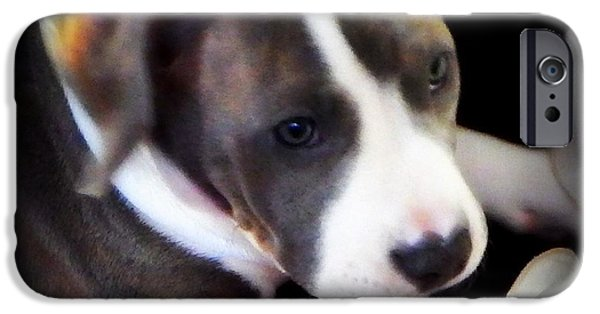 Puppy Love Framed Prints iPhone Cases - Pitty Lil Puppy iPhone Case by Bobbee Rickard