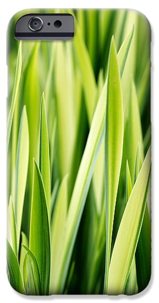 Plant iPhone Cases - Plant Abstract 3 iPhone Case by Rebecca Cozart