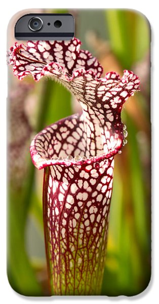 Plant - Pretty as a pitcher plant iPhone Case by Mike Savad