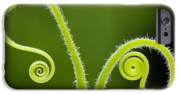 Tendrils iPhone Cases - Plant tendrils iPhone Case by Tim Gainey