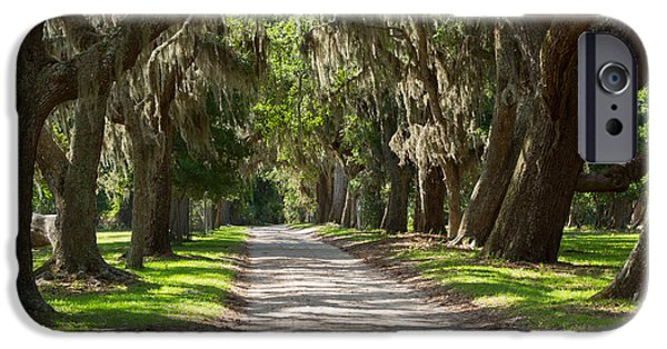 Spanish Moss iPhone Cases - Plantation Road iPhone Case by Louise Heusinkveld