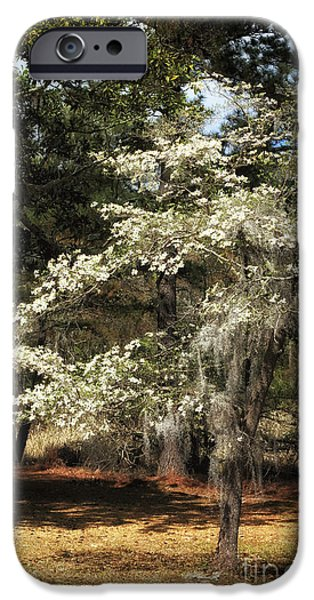 Plantation Tree iPhone Case by John Rizzuto