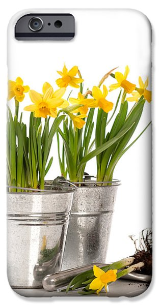 Planting Bulbs iPhone Case by Amanda And Christopher Elwell