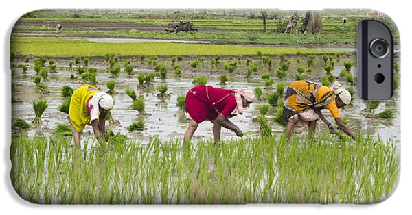 Floods Photographs iPhone Cases - Planting Rice India iPhone Case by Tim Gainey