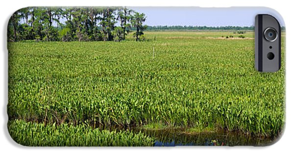 Wetland iPhone Cases - Plants On A Wetland, Jean Lafitte iPhone Case by Panoramic Images