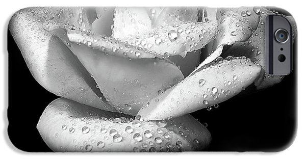Monotone iPhone Cases - Platinum Rose Flower iPhone Case by Jennie Marie Schell
